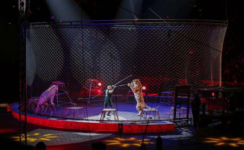 Un espectáculo circense con animales. EFE/Archivo