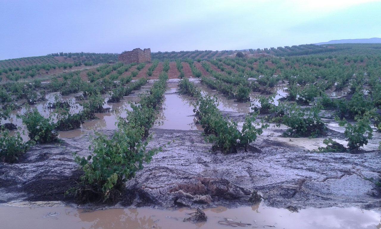 Abundante agua e inundaciones en cultivos de la zona de Utiel-Requena tras la tormenta de ayer.