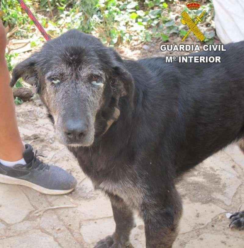 Uno de los perros recogidos. EFE/Guardia Civil