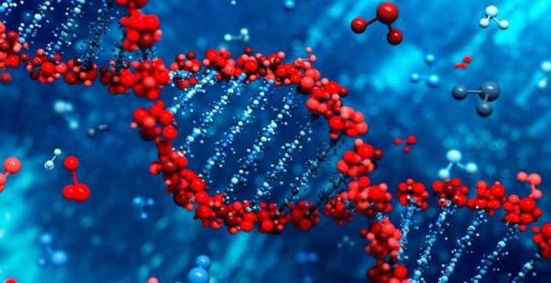 Un estudio del CSIC buscará las causas genéticas de las diversas reacciones inmunitarias a Covid-19. / Pixabay