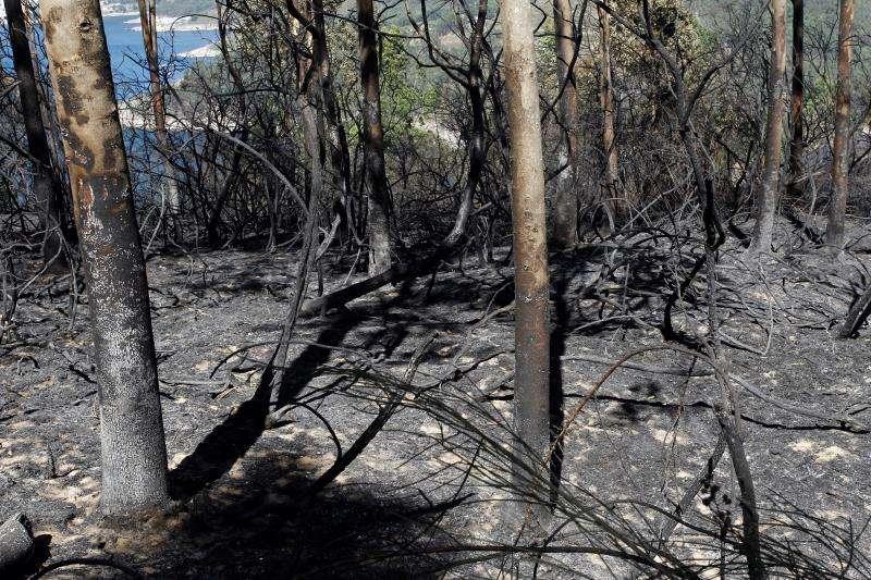 Zona de monte calcinada por un incendio. EFE/Archivo