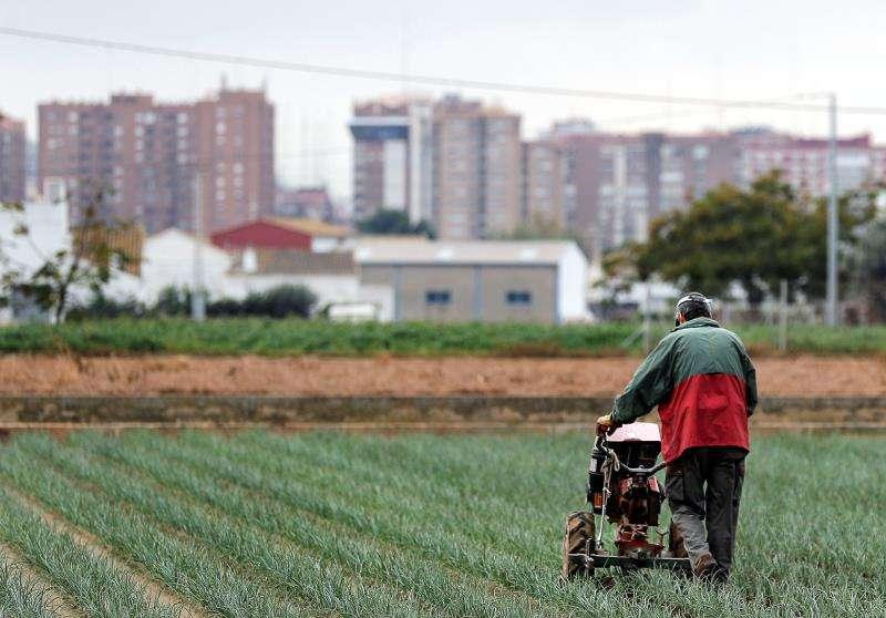 Un agricultor cultiva su campo a escasos metros de la ciudad de València. EFE/Manuel Bruque