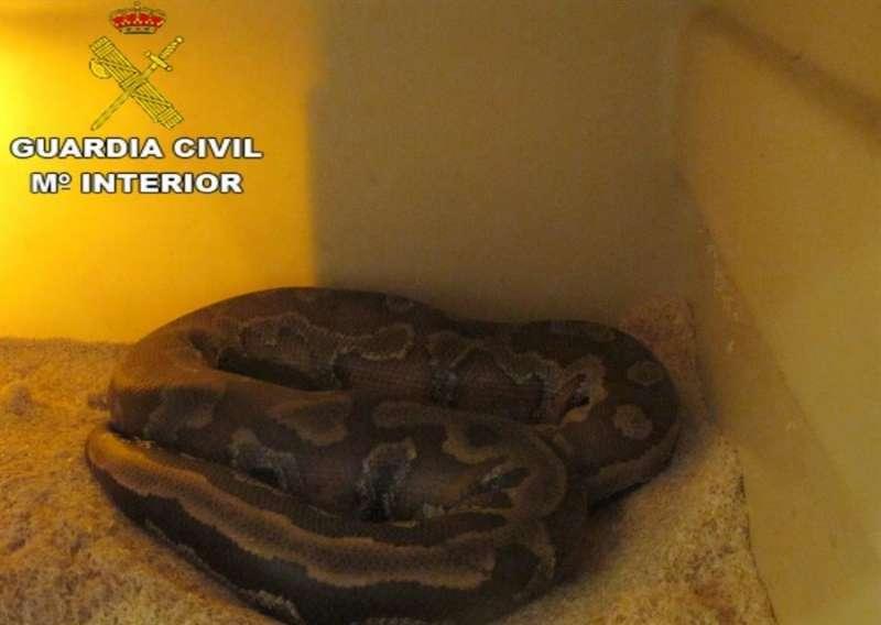 Imagen de la serpiente encontrada en l