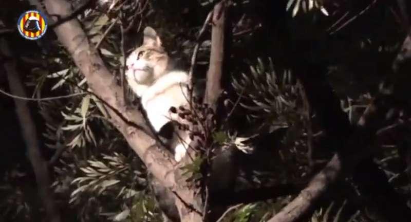 El gato subido al árbol de 15 metros