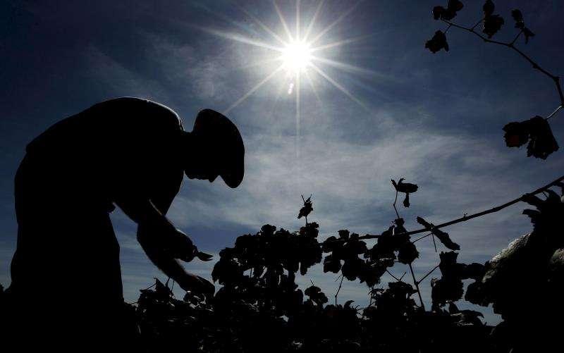 Un agricultor trabaja en un viñedo valenciano. EFE/Archivo