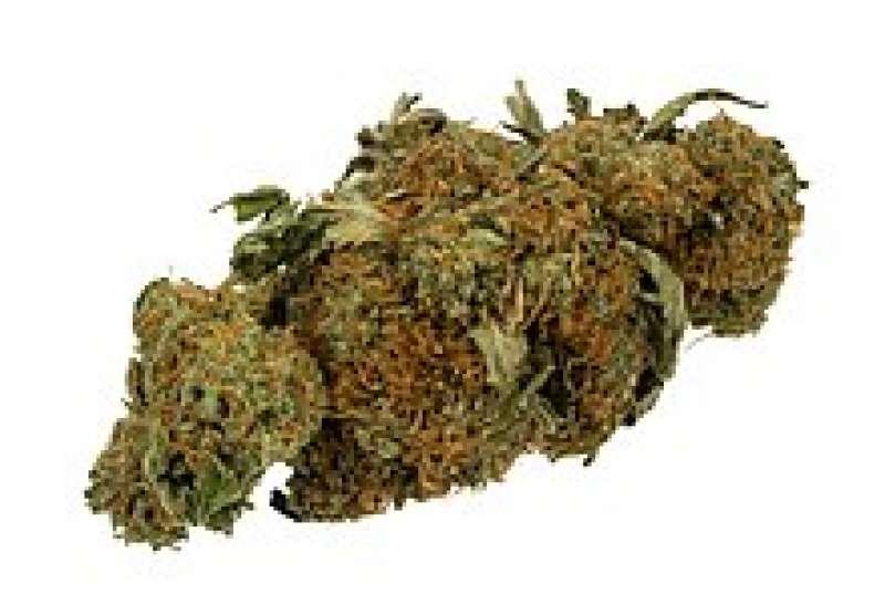 Cannabis. EPDA