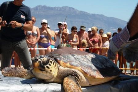 Suelta de un ejemplar de tortuga marina en la Serra Gelada. Foto EPDA