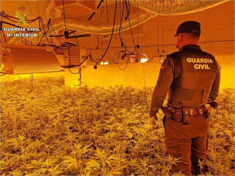 Vista parcial de la plantación, en una imagen de la Guardia Civil. EFE.