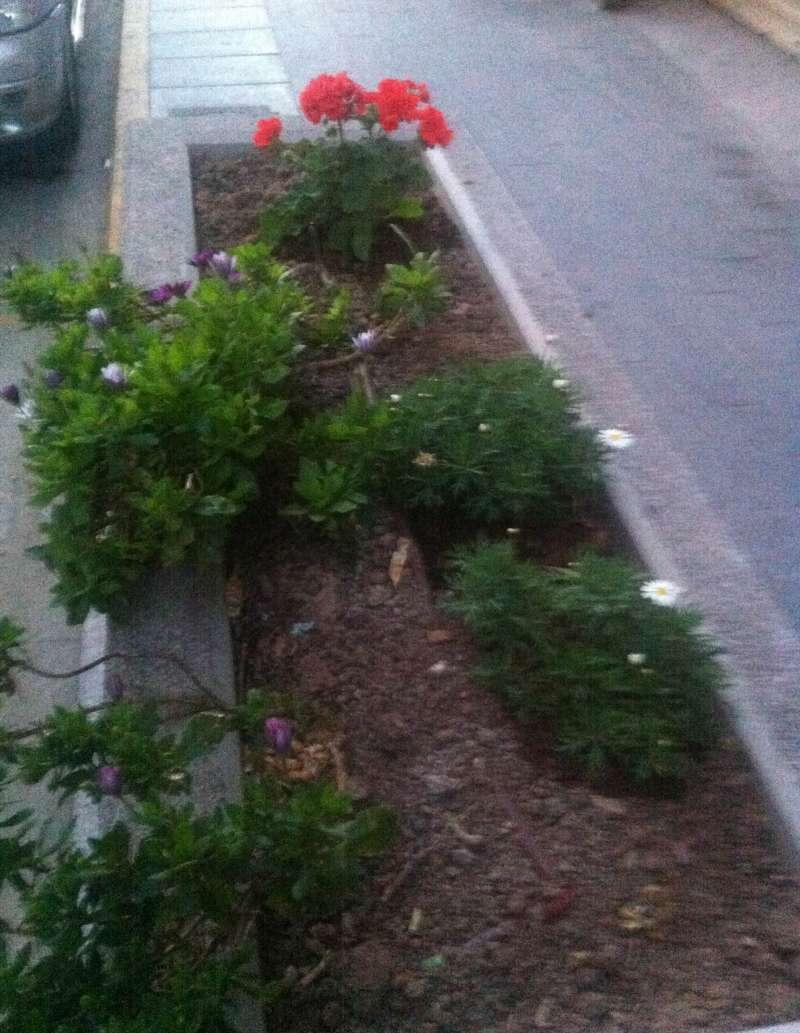 Jardinera de la calle Pintor Gisbert. FOTO EPDA