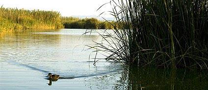 Una imagen de la Albufera. WWW.TURISVALENCIA.ES
