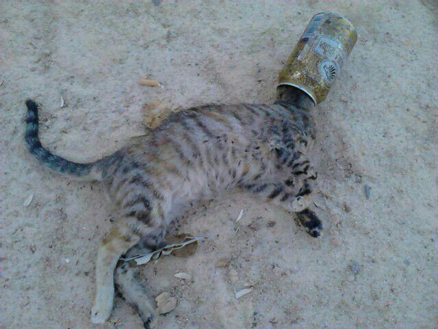 Imagen del gato maltratado. FOTO: EPDA