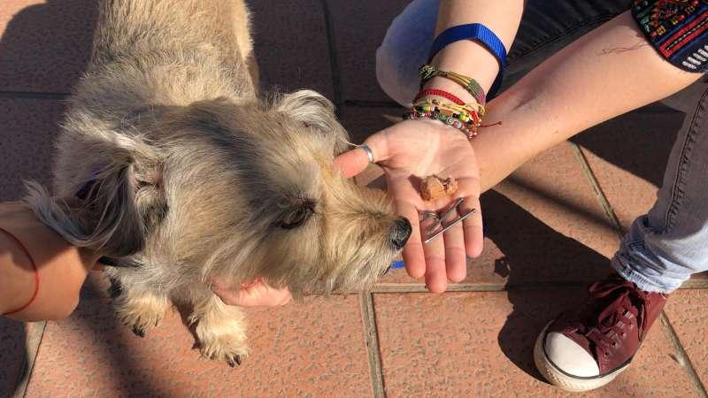 El dueño de un perro muestra las tachas ocultas en la salchicha. EPDA