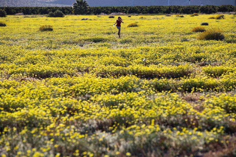 Una niña corre por un campo poblado de flores. EFE/Archivo