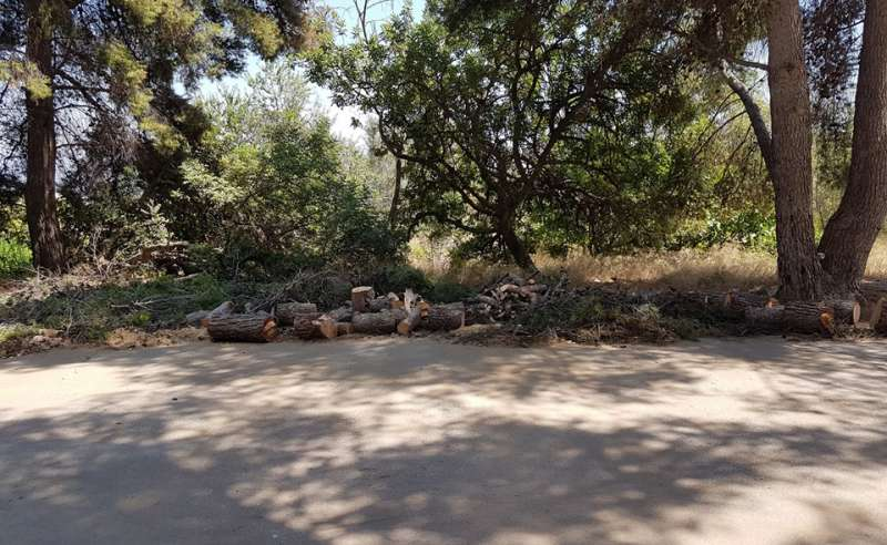Pinos retirados en el parque Municipal