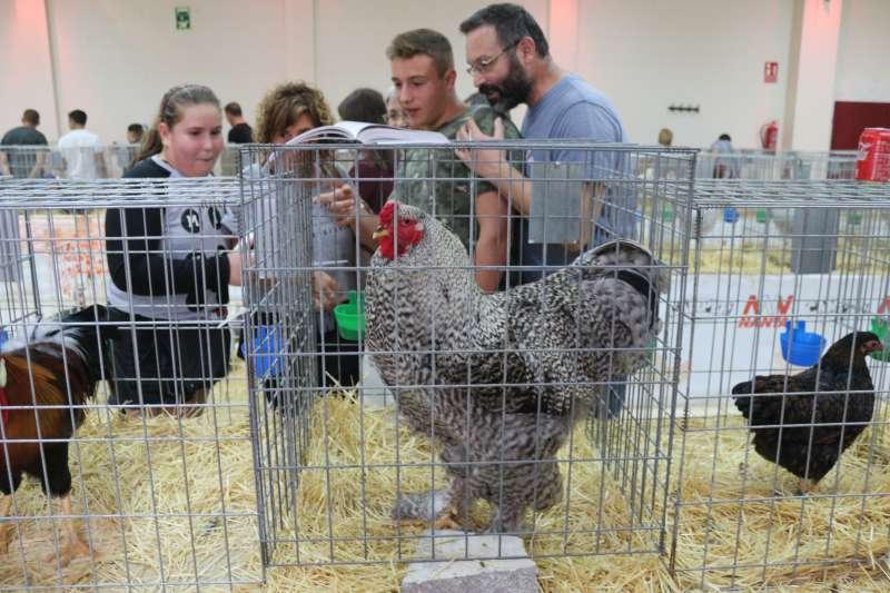 La feria avícola captó  las miradas de muchos curiosos