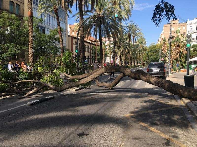 El árbol caído, que cruza de lado a lado toda la vía en dirección al centro de València. EFE/Juan Carlos Cárdenas