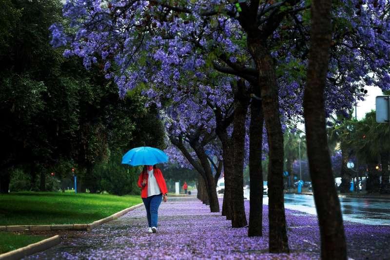 Una mujer se cubre con un paraguas mientras llueve. EFE / Manuel Lorenzo/Archivo