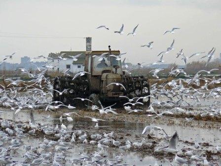 Terreno donde se realizan labores de fangueo. Foto EPDA