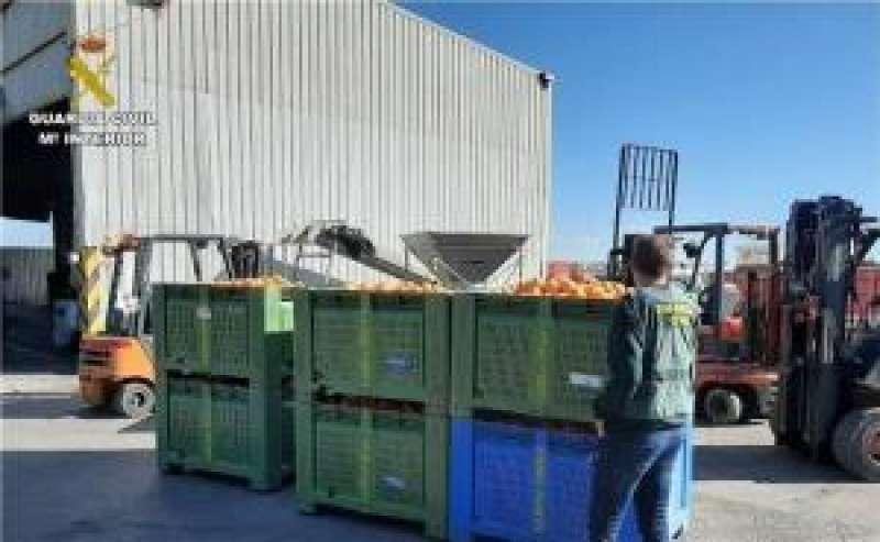 Naranjas decomisadas, en una imagen de la Guardia Civil. EFE