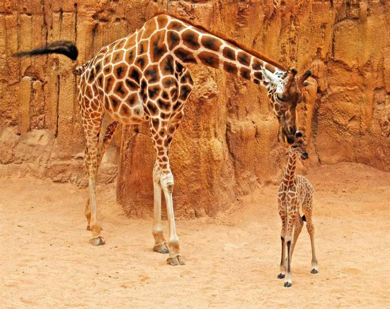 Imagen de la jirafa
