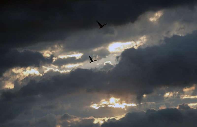 Dos aves sobrevuelan el cielo nublado de Valencia.