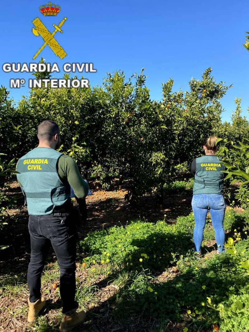 Agentes de la Guardia Civil del equipo Roca de Paiporta. EPDA