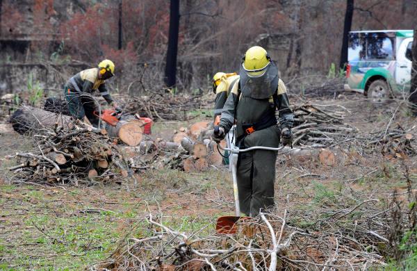 Brigada forestal trabaja en la extinción de un incendio. EPDA