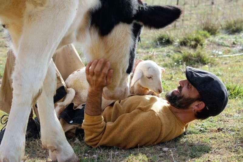 El Santuario Compasión Animal en Enguera