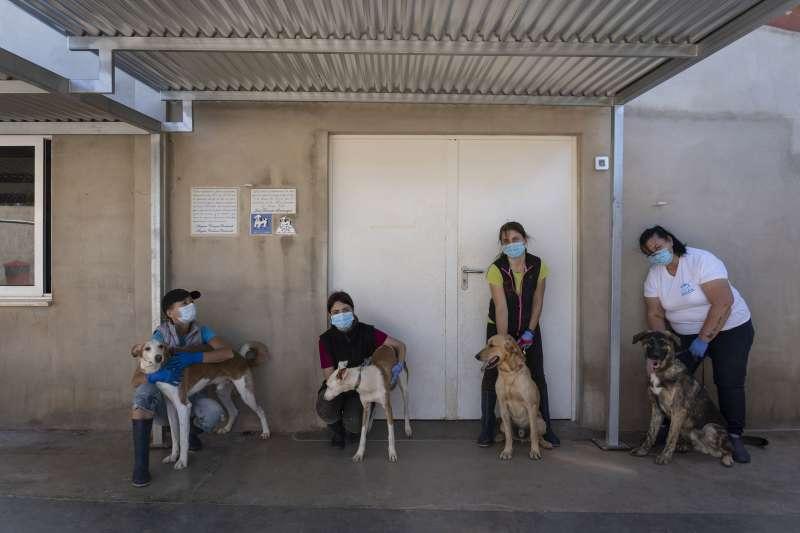 Desfile perros sin raza