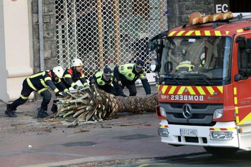 Una de las palmeras caídas por las fuertes rachas de viento en el centro de Valencia es retirada por bomberos y Policía Local. EFE/ Juan Carlos Cárdenas.