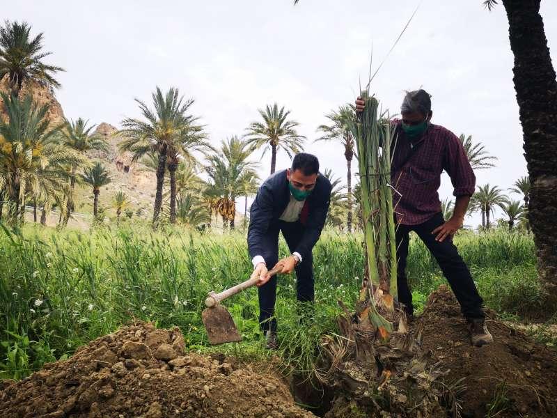 Plantación palmera/EPDA