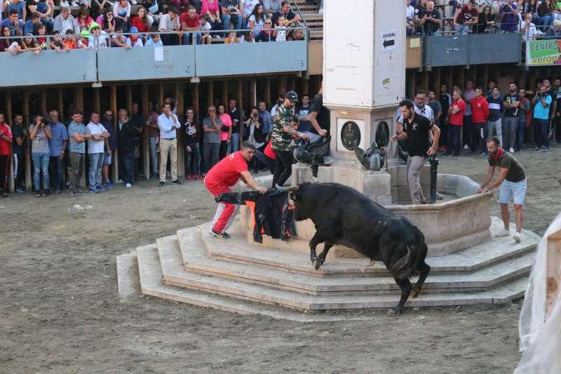 El toro Sastre ganó el premio al toro de la merienda