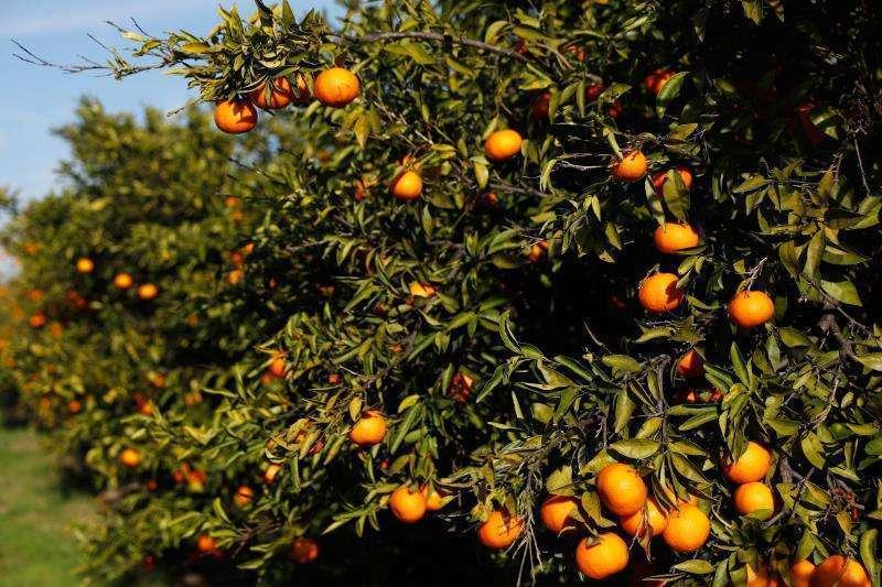 Naranjo/EPDA