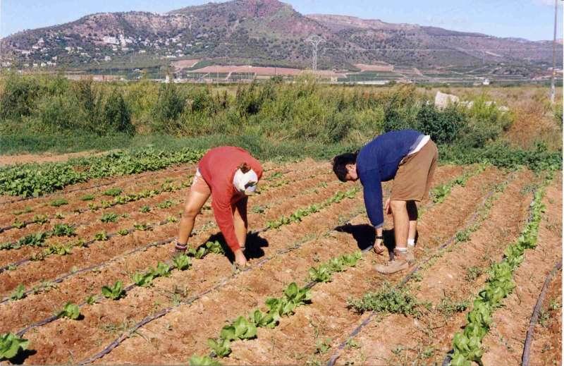 Jóvenes al camp, UNIÓ de llauradors Comunitat Valenciana -EPDA