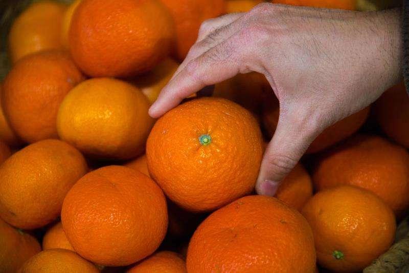 Una persona coge una mandarina de un cesto. EFE/Archivo