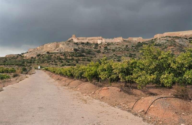 Campos cercanos al castillo de Sagunt, en su ladera sur. / PACO QUILES
