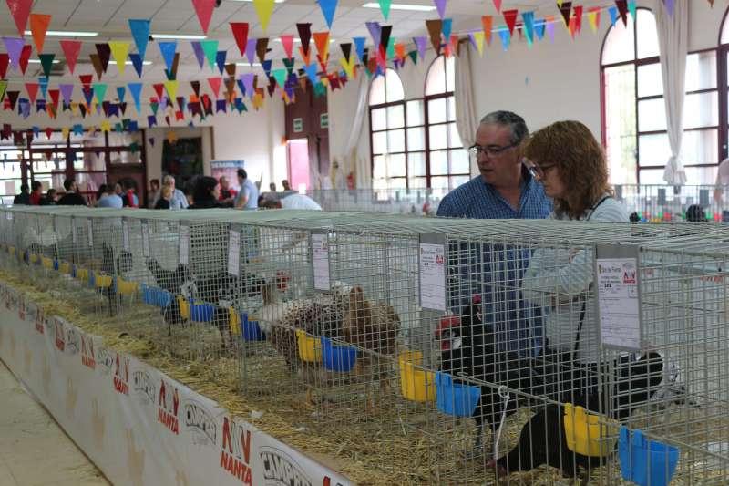 Numerosas aves compiten por los premios