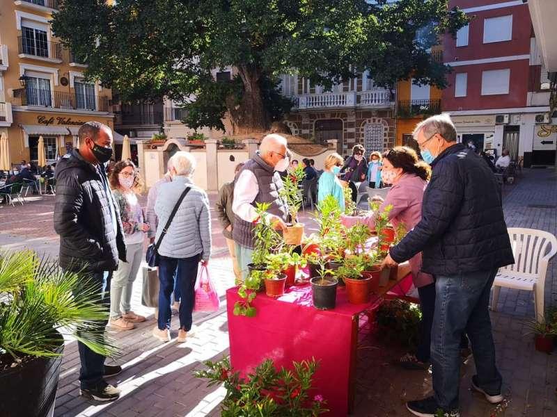 Las plantas se distribuyen por el pueblo y se reparten en los vecinos. Foto: L.Rosalén