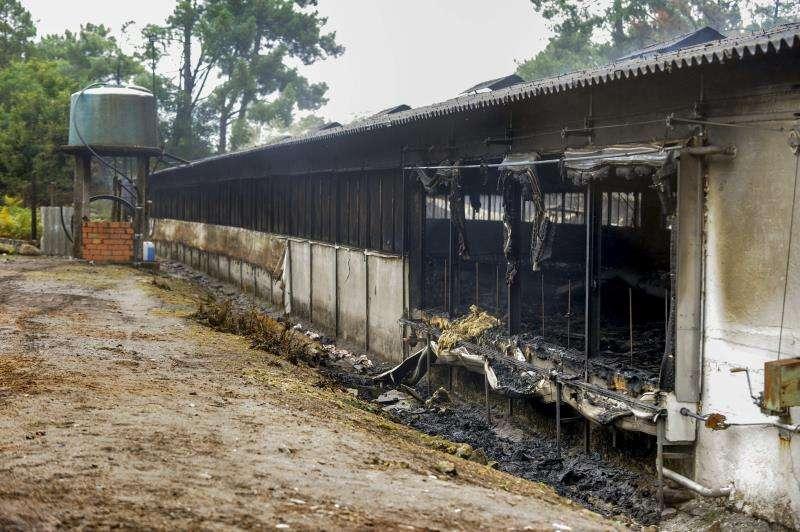 Imagen de una granja de gallinas arrasada por el fuego. EFE/Archivo