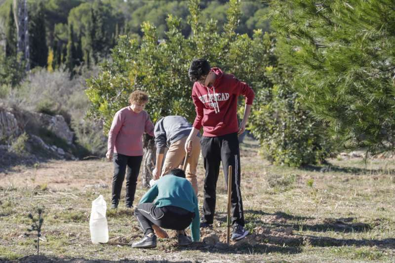 Campaña de siembra de árboles en Llíria./epda