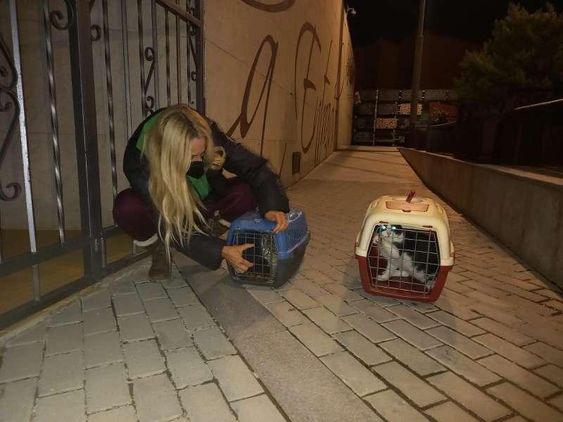 Soltando gatos esterilizados