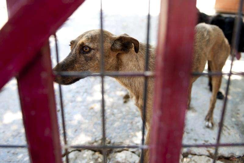 Un perro espera dueño en una perrera. EFE/Archivo