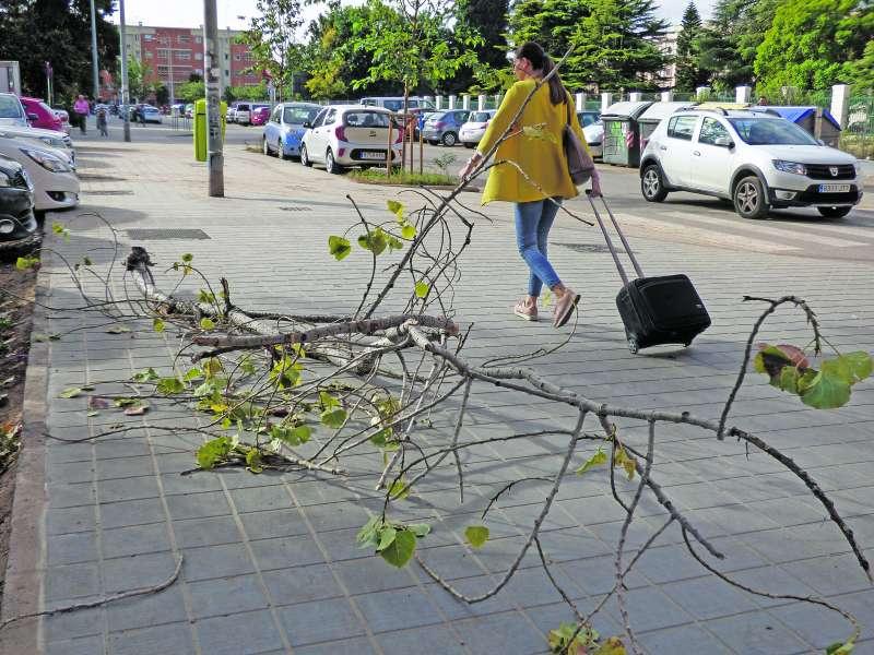 Ramas que tardan en recogerse y parques con muchas carencias en Fuensanta. / jose forés romero