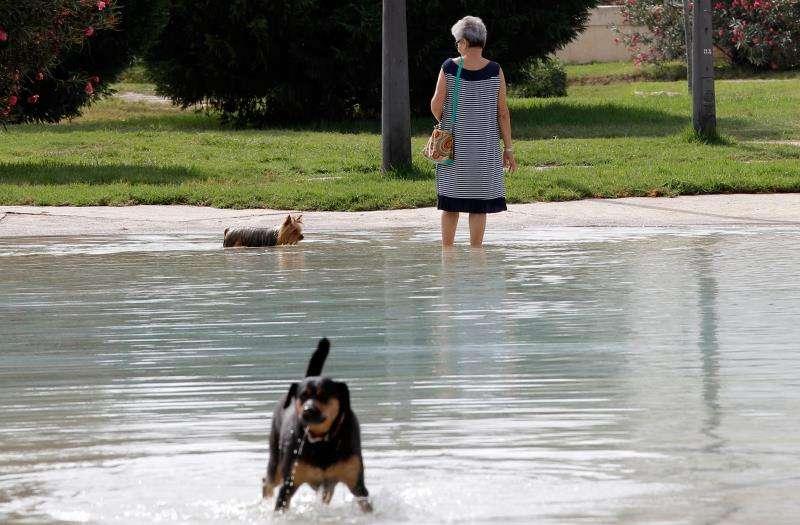 Una mujer se refresca junto a su perro. EFE/Archivo