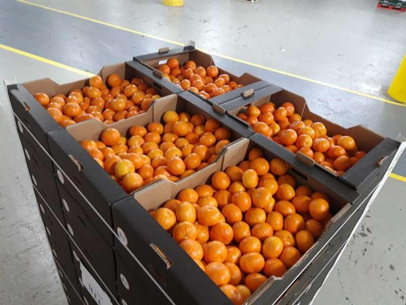 Donación de mandarinas