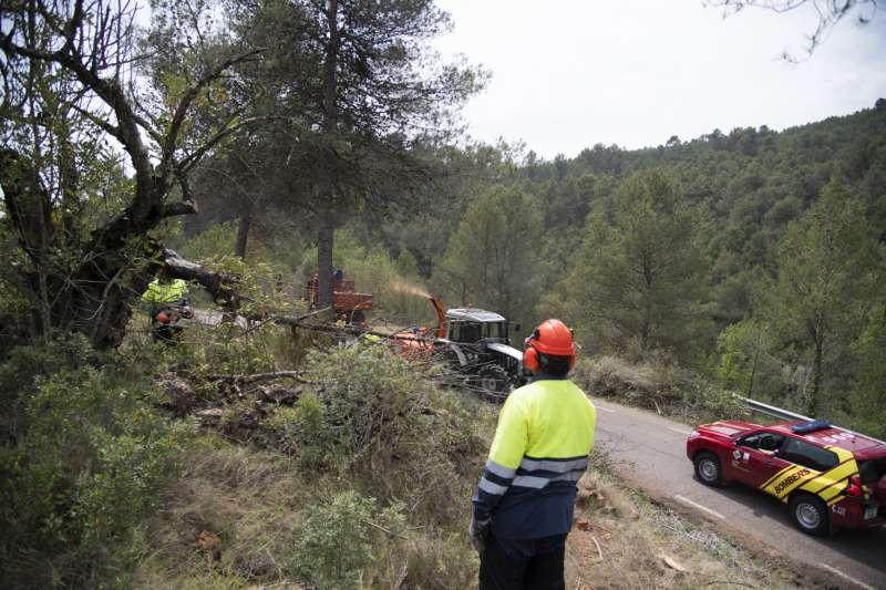 Trabajos de las brigadas forestales