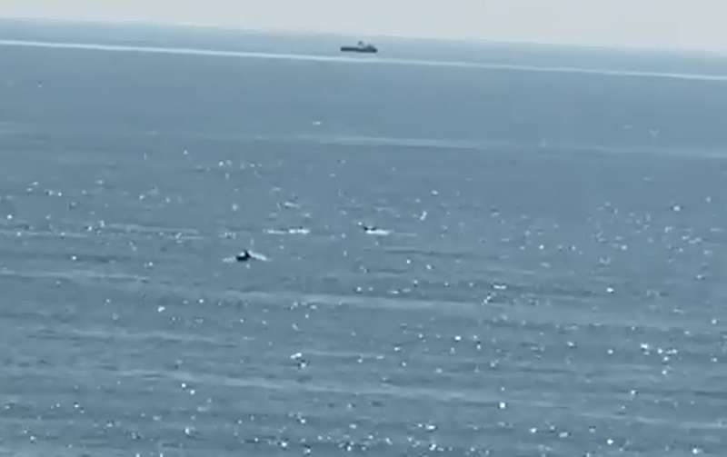 Delfines en una de las playas de Sagunt. EPDA
