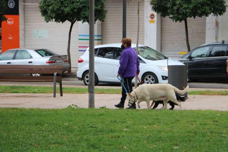 Un perro por Quart de Poblet. EPDA