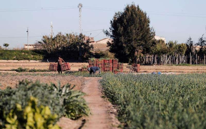 Agricultores trabajando en su huerto en Alboraia. EFE/Archivo