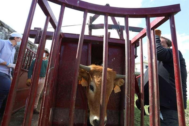 Una ganadería de toros. EFE/Archivo